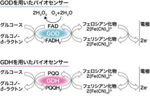 図1 酵素電極法によるグルコースセンサーの反応スキーム2) GOD:glucose oxidase , GDH:glucose dehydrogenase