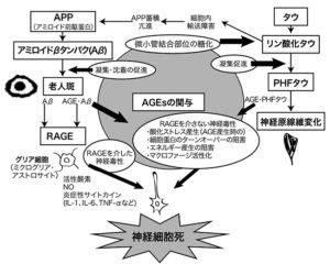 図3. AGEsのアルツハイマー病への関与 (佐々木信幸 25))