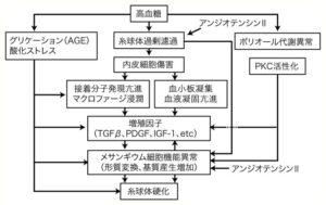 図3 糖尿病性腎症の発症と進展のメカニズム(仮説)