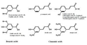 図2. 植物に含まれるフェノール酸類 9)