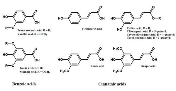 図2.  植物に含まれるフェノール酸類