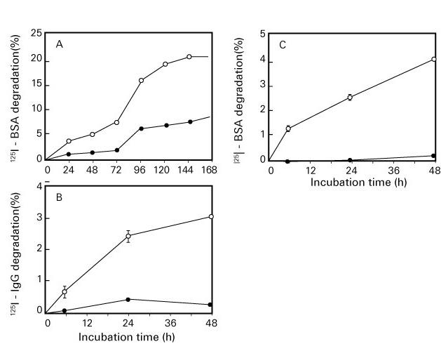 図 4.  酸化蛋白質分解酵素(OPH)の酸化・糖化蛋白分解作用(Fujino T, et al 21))