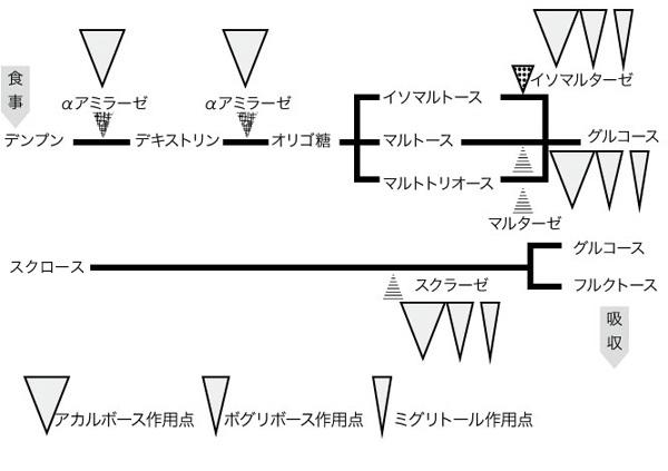 図 3. αグルコシダーゼ阻害薬の作用ポイント