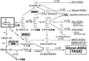 図1 生体内におけるAGEs生成経路